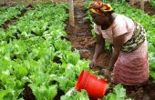 Nachhaltige Investitionen für Afrika auf den Weg bringen